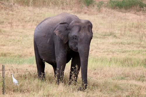 Watching wild elephants during jeep safari in Kandulla national park Sri Lanka Poster