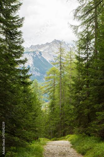Papiers peints Route dans la forêt a path trough a forest in Alps