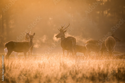 deer sunrise Poster