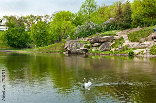 Fotobehang Zwaan Beautiful swan on the lake in Sofiyivsky Park in Uman, Ukraine