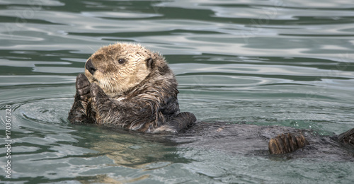 Sea Otter Applause Poster