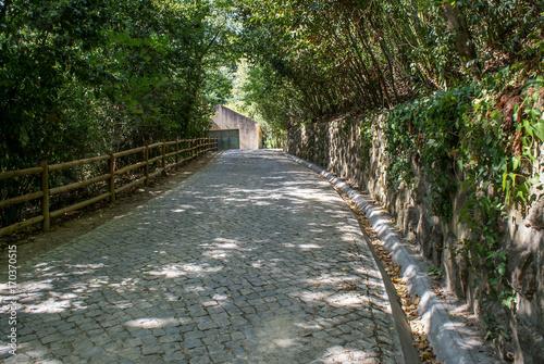 In de dag Weg in bos Coimbra, Portugal