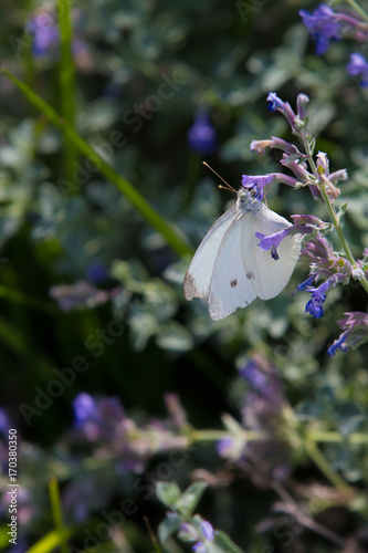 Fotobehang Vlinder White butterfly vertical