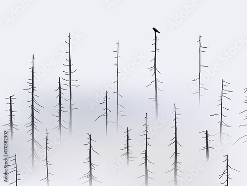 Crow holding at the top of tree in foggy forest - 170382302