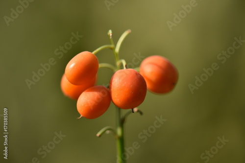 Fotobehang Lelietjes van dalen Lily Of The Valley Berries