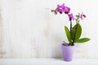 Orchid in pot on a wooden table