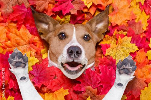 Fotobehang Crazy dog autmn fall leaves surprised dog