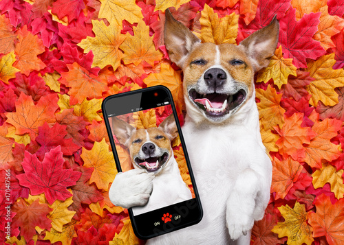 Poster Crazy dog autmn fall leaves dog selfie