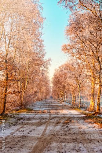 Fotobehang Natuur Winter in East Frisia