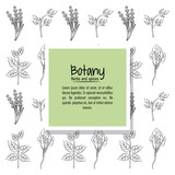 Botany herbs and spices over white background vector illustration graphic design - 170467392