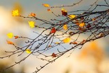 Autumn leaves in forest closeup