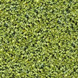 Fototapety Seamless Tileable Natural Ground Field Texture Background
