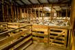 Shearing shed, New Zealand