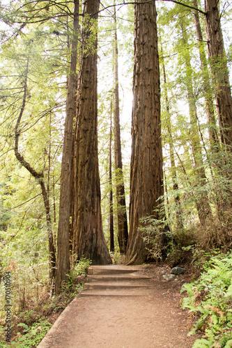 Papiers peints Route dans la forêt Two guardians of the trail