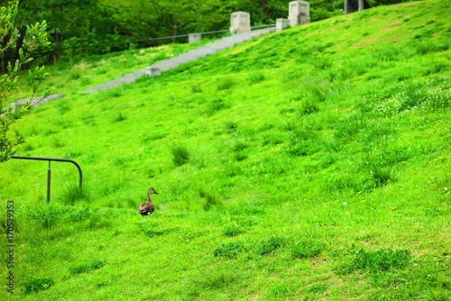 Fotobehang Lime groen 池のある公園の風景4