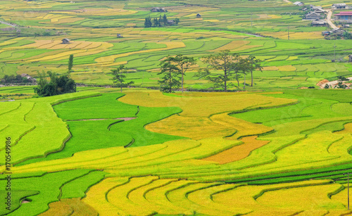 Fotobehang Lime groen Landscape of rice field in Vietnam.