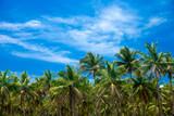 Palm trees against blue sky - 170558173