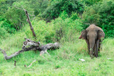 A young elephant right next to an adult one. - 170558548