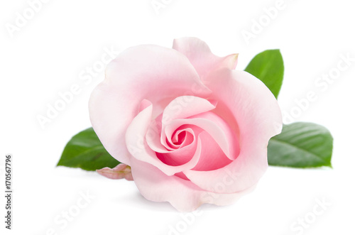 Staande foto Roses single bud of pink rose isolated on white background