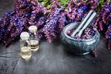Sage plant,  essential oil and  stone mortar on dark background. Alternative health care fresh salvia flowers. - 170595765