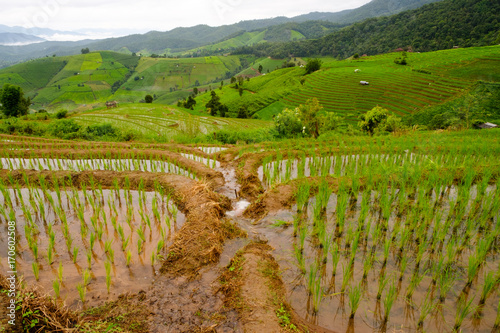Fotobehang Rijstvelden Irrigation for Rice fields on terraced of Mae Cham,Chiang Mai, Thailand. Thailand landscapes.