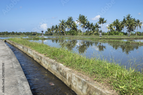 Fotobehang Rijstvelden Flooded ricefield with canal and palmtrees in Ubud, Bali, Indonesia