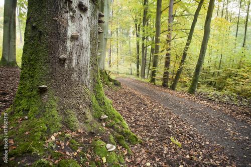 Fotobehang Weg in bos droga leśna