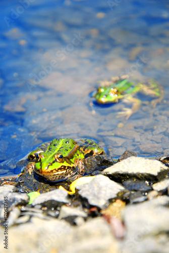 Fotobehang Kikker Frogs