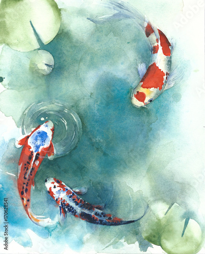 Koi fish Japanese symbol in the pond watercolor painting illustration  © Yulia