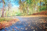 road in fallpark with golden leaves at sunny day, retro toned - 170630943