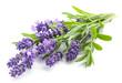 Leinwandbild Motiv Lavender flowers on a white