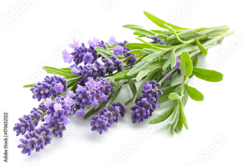 Lavender flowers on a white