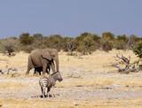 Elephant Zebre