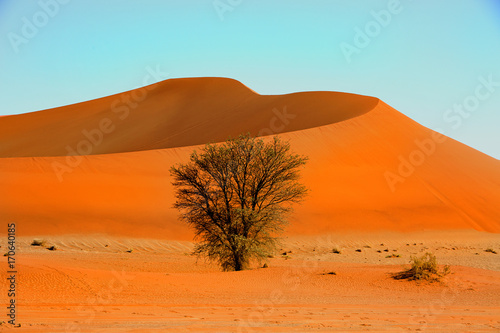 Aluminium Oranje eclat Sossusvlei - Large orange sand dune with an isolated green bush in the foreground, Namibia