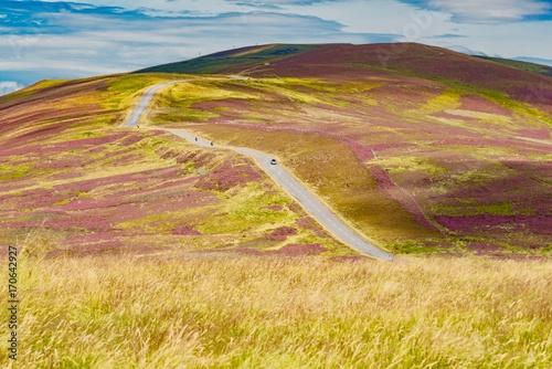 Foto op Plexiglas Beige hills of purple heather blossoms in the Highlands of Scotland in England