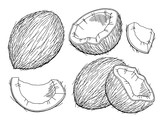 Coconut graphic black white isolated sketch illustration vector - 170676389
