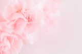Fototapety Pink Carnation Flowers Bouquet. soft filter.
