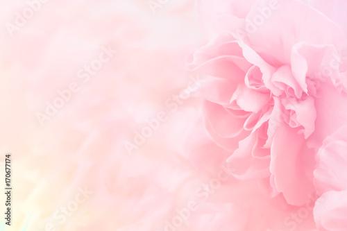 Różowy bukiet kwiatów goździka. miękki filtr.