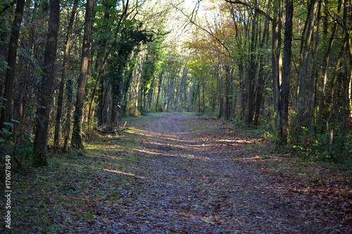 Fotobehang Weg in bos Ballade sur chemin de foret
