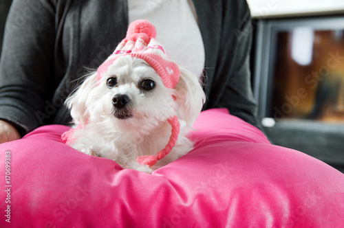 Woman holding a maltese dog dressed in a cap with hearts