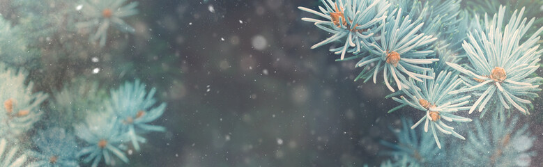 Snow fall in winter forest. Christmas new year magic. Blue spruce fir tree branches detail. Banner image