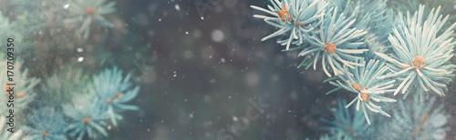 Opad śniegu w lesie zimą. Boże Narodzenie nowy rok magii. Błękitna świerkowa jodła rozgałęzia się szczegół. Obraz baneru