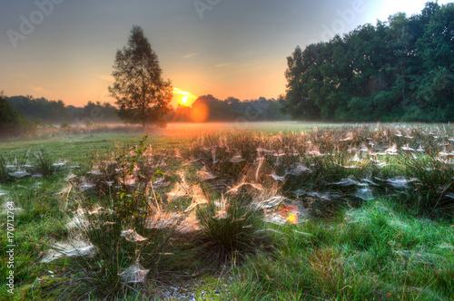 Fotobehang Natuur Spider webs between grass