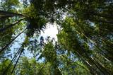 yoto - Foresta di Bambù