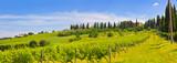 Toskana-Panorama, bei Montespertoli - 170735973