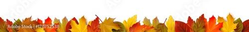 Bunte Herbstblätter - Bordüre Banner - 170752538