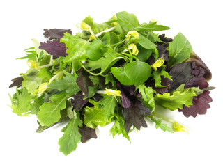 Pflücksalat - Blattsalat