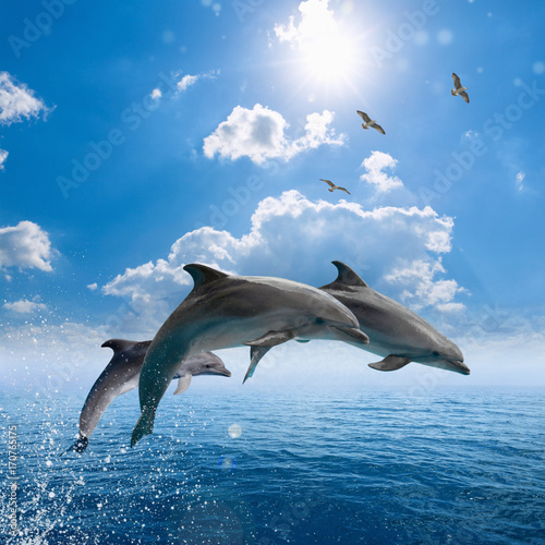 Plexiglas Dolfijn Dolphins jumping out of blue sea, seagulls fly high in blue sky