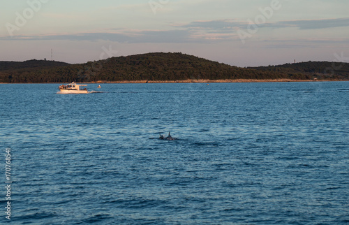 Aluminium Dolfijn Dolphins at dusk in the Adriatic sea