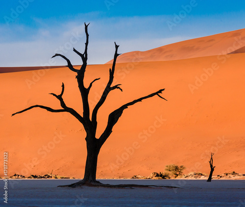 Aluminium Oranje eclat Minimal landscape with Dead Camelthorn Trees against red dunes in Deadvlei, Sossusvlei. Namib-Naukluft National Park, Namibia, Africa
